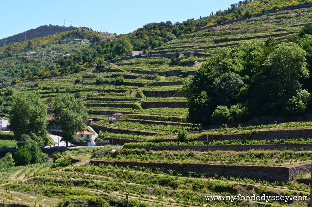 Vineyards, Douro Valley, Porto | www.myfoododyssey,com