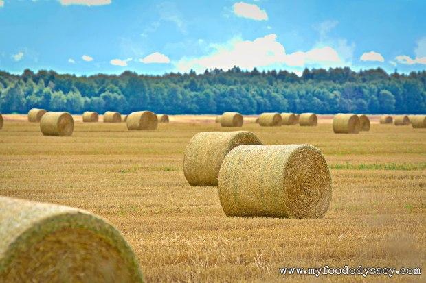 Bales of Hay | myfoododyssey.com