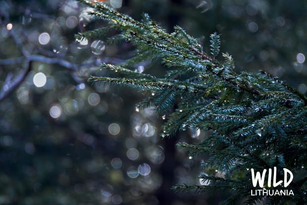 Natural Christmas Tree Fairy Lights   www.myfoododyssey.com