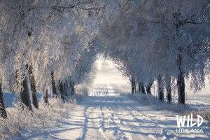 Snowy Lanes | www.junemolloy.com