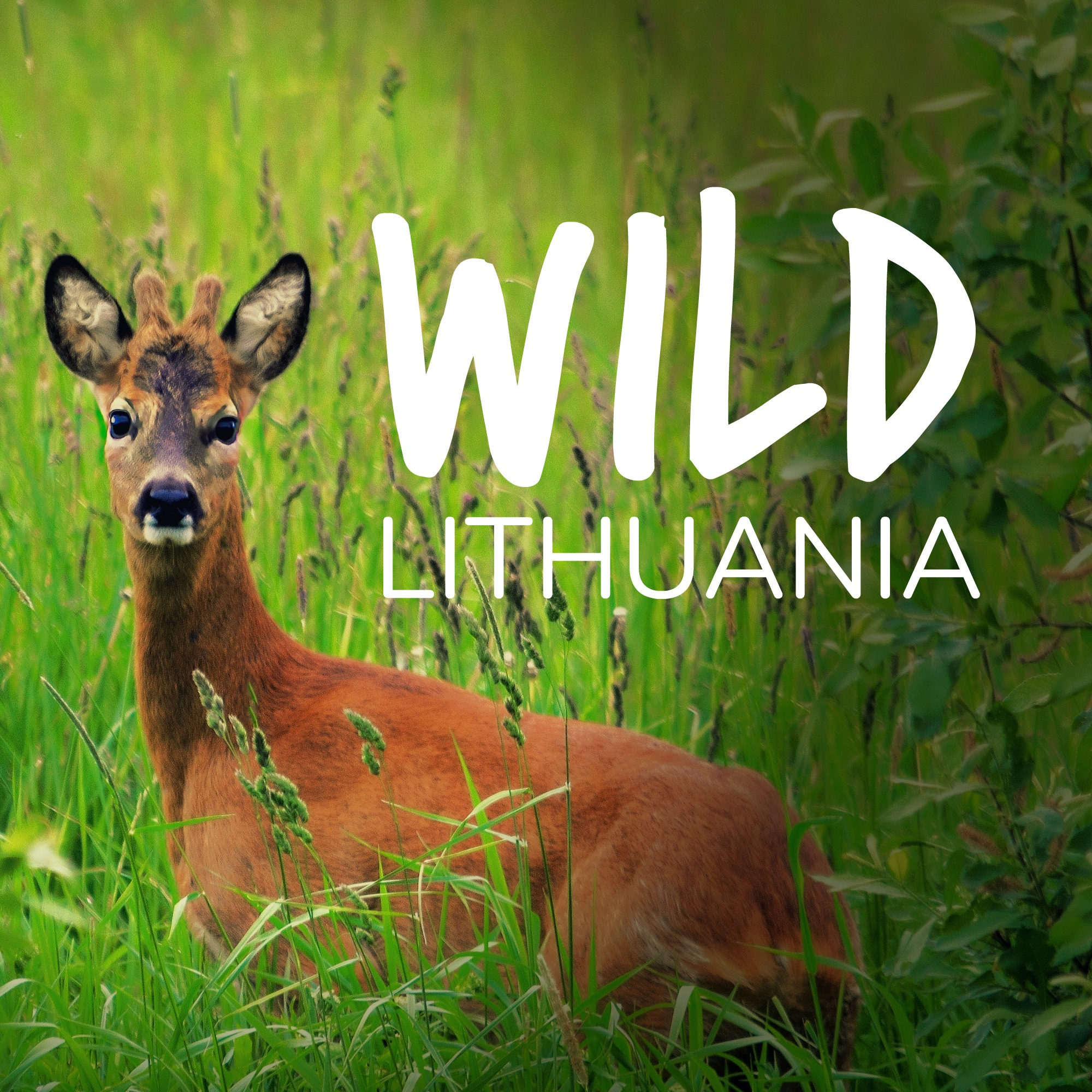 Wild Lithunania | www.wildlithuania.com